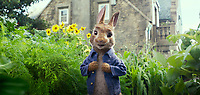 Peter Rabbit (2018) <br /> Peter Rabbit (James Corden)<br /> *Filmstill - Editorial Use Only*<br /> CAP/KFS<br /> Image supplied by Capital Pictures