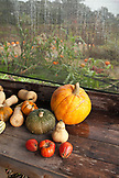USA, California, Sonoma, pumpkins and squash for sale at a road side produce stand