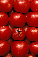 """One bad apple: Jonathan apples in rows and one spoiled """"bad"""" apple, Missouri USA"""