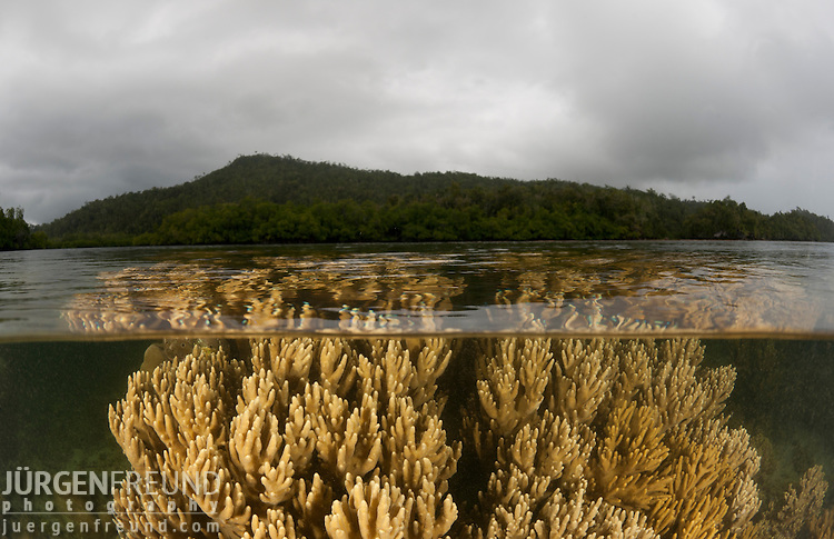 Split level of coral reef in the shallows. North Raja Ampat, West Papua, Indonesia
