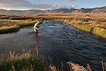 Stacey Hill fly fishes for trout during a summer evening on Birch Creek, Idaho.