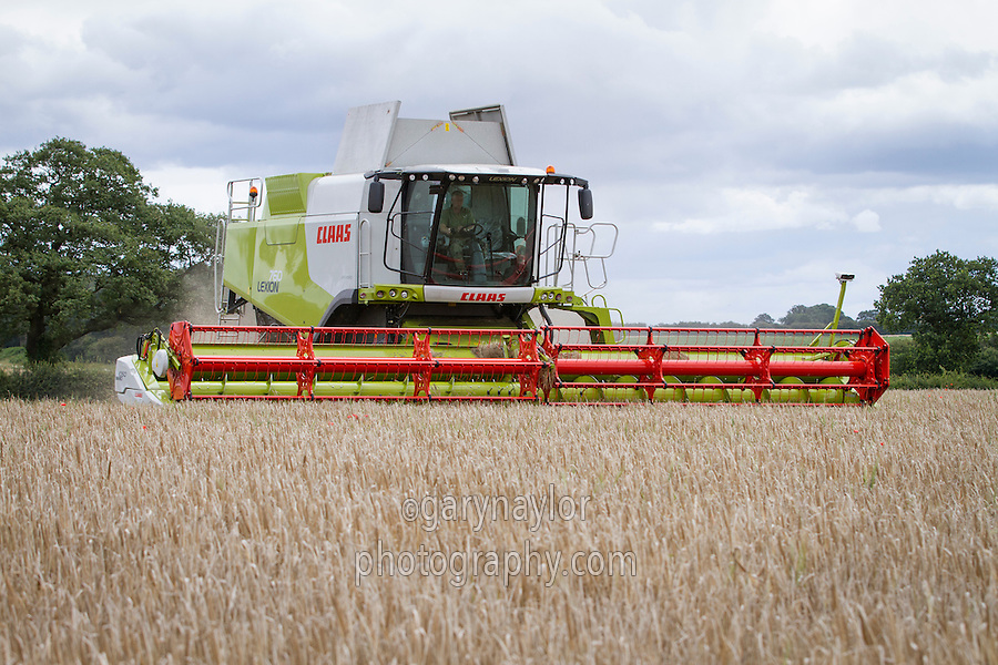 Harvesting winter barley with a Claas Lexion 760 combine & 10.5m header - July; Norfolk