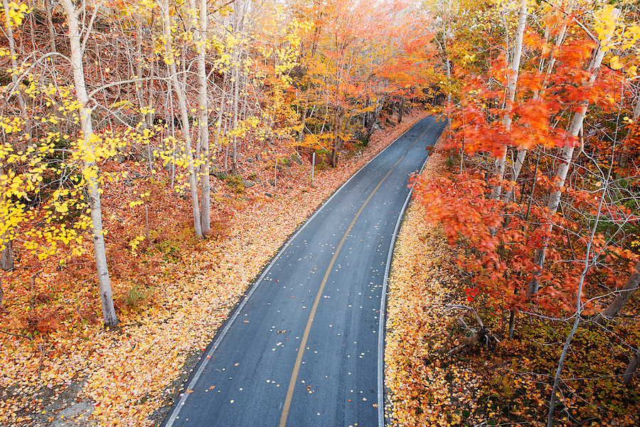 Park road running through autumn foliage, Mount Desert Island, Acadia National Park, near Bar Harbor, Maine, USA