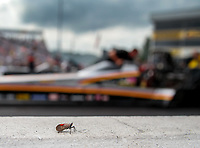 Sep 15, 2018; Mohnton, PA, USA; A bug sits on the wall alongside the dragster of NHRA top fuel driver Mike Salinas during qualifying for the Dodge Nationals at Maple Grove Raceway. Mandatory Credit: Mark J. Rebilas-USA TODAY Sports