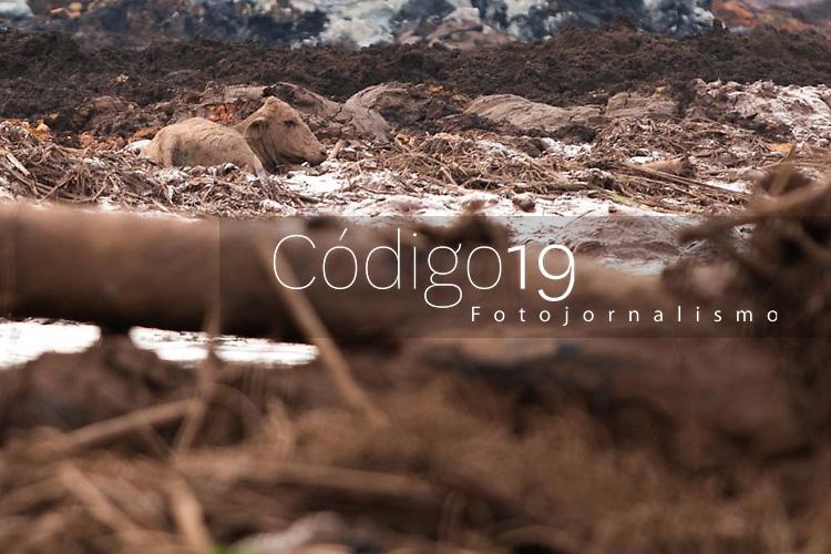 BRUMADINHO, MG, 25.01.2019:ROMPIMENTO DA BARRAGEM EM BRUMADINHO. Animais lutam pela vida durante desastre ambiental na represa da Cia Vale, em Corrego do Feijao-Brumadinho, região metropolina de Belo Horizonte, MG, na tarde desta sexta feira (25) (foto Giazi Cavalcante/Codigo19)