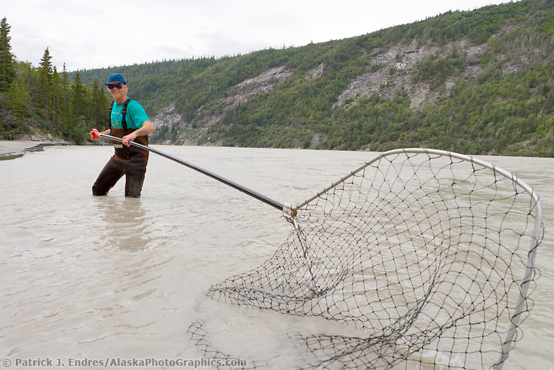 Dipnetting for subsistence harvest of salmon in the Copper River, Interior, Alaska