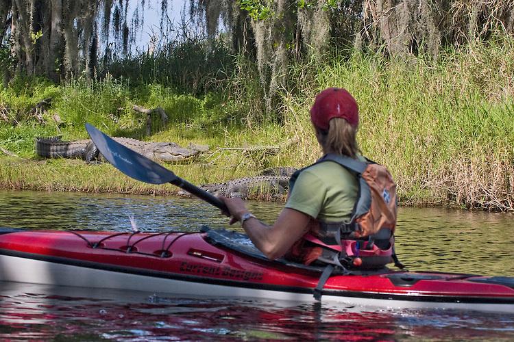 Kayaking, alligators, Myakka River State Park, Florida, Tampa Bay, Gulf Coast, USA, Kristin Nelson, released, Alligator mississippiensis;