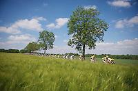 peloton racing through the sunny fields<br /> <br /> 2014 Belgium Tour<br /> stage 4: Lacs de l'Eau d'Heure - Lacs de l'Eau d'Heure (178km)