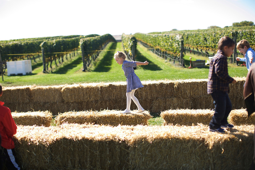 SAGAPONACK, NY - OCTOBER 10, 2015: Kids play on hay bales at the Wollfer Estate Harvest Festival.<br /> <br /> CREDIT: Clay Williams.<br /> <br /> &copy; Clay Williams / claywilliamsphoto.com