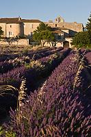 Europe/France/Rhône-Alpes/26/Drôme/Salles-sous-Bois:  Champ de lavande et vieux village avec son prieuré et ses vieilles demeures