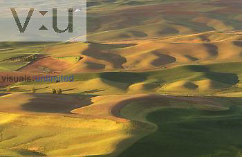 Contour farming of wheat on rolling hills, Palouse region near Colfax, Washington.
