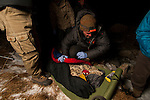 Snow Leopard (Panthera uncia) biologist, Shannon Kachel, keeping male warm during collaring, Sarychat-Ertash Strict Nature Reserve, Tien Shan Mountains, eastern Kyrgyzstan