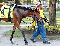 Gunslinger in the paddock as Opry (no. 8) wins the With Anticipation  Stakes (Grade 3), Aug. 29, 2018 at the Saratoga Race Course, Saratoga Springs, NY.  Ridden by  Javier Castellano, and trained by Todd Pletcher, Opry finished 1 1/2 lengths in front of Somelikeithotbrown (No. 7).  (Bruce Dudek/Eclipse Sportswire)