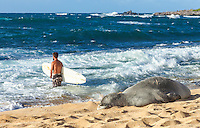 A Hawaiian monk seal takes in the sun as a distant surfer wades into the surf with his board at Ho'okipa Beach, East Maui.