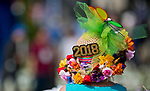 "LOUISVILLE, KY - MAY 04: A woman wears a decorated hat with ""2018"" emblazoned on it on Kentucky Oaks Day at Churchill Downs on May 4, 2018 in Louisville, Kentucky. (Photo by Eric Patterson/Eclipse Sportswire/Getty Images)"