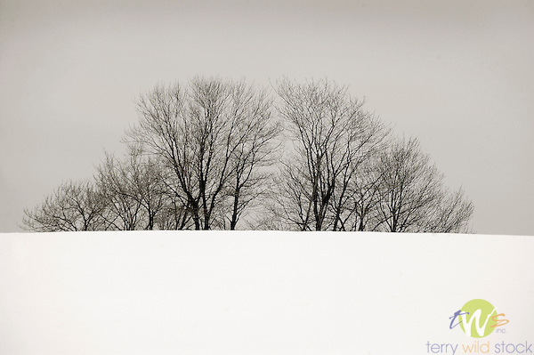 Trees rising from winter snow scape.