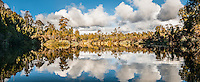 Five Mile Creek and native coastal forest near Okarito, Westland Tai Poutini National Park, West Coast, UNESCO World Heritage Area, New Zealand, NZ