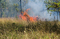 Burning rice fields, an unfortunate but essential component of subsistence rice farming in Cambodia. (Prey Veng, Cambodia)