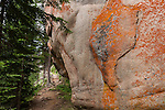 evergreen, lichens, granite wall, nature, trail. forest, Wild Basin, Rocky Mountain National Park, Colorado, USA