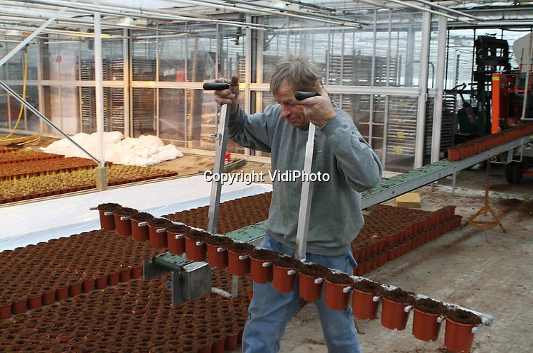 Foto: VidiPhoto..BEMMEL - Personeel van Bejafleur pot- en perkplanten in Bemmel vult en plaatst maandag nieuwe potten met grond voor zo'n 600.000 mini-Zantedeschia's. De voor Nederland unieke kleine potmaat van Bejafleur met plant, blijkt ook razend populair in het buitenland, met name Engeland en Duitsland. De teelt van deze kamer- en tuinplant is enorm arbeidsintensief en daardoor nauwelijks interessant voor andere kwekers, hoewel de vraag nog steeds flink toeneemt. Bejafleur probeert zich op deze wijze te onderscheiden van de concurrentie. De eerste oogst is begin maart.