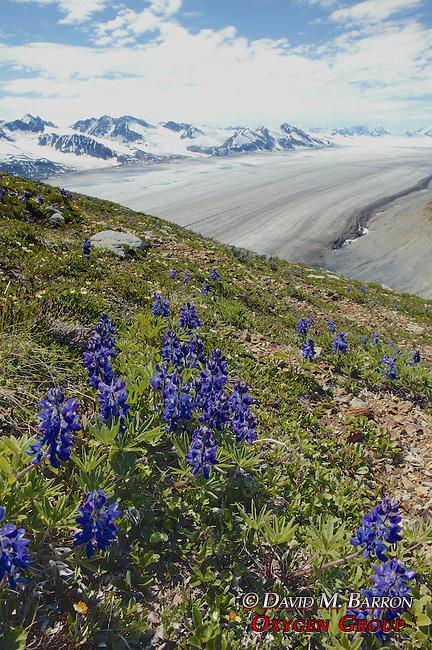 Flowers & Glacier Scenic