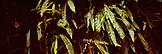 USA, California, ferns, Avenue of the Giants, Eureka
