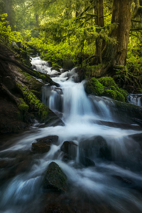 An intimate scene along one of many creeks in the Columbia Gorge.  The immediate foreground is only a couple of feet wide; I positioned myself between several low tree limbs with the camera just a few inches from the ground to bring this scene to life.<br />
