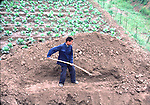 Farmer digging in field near Xian, China