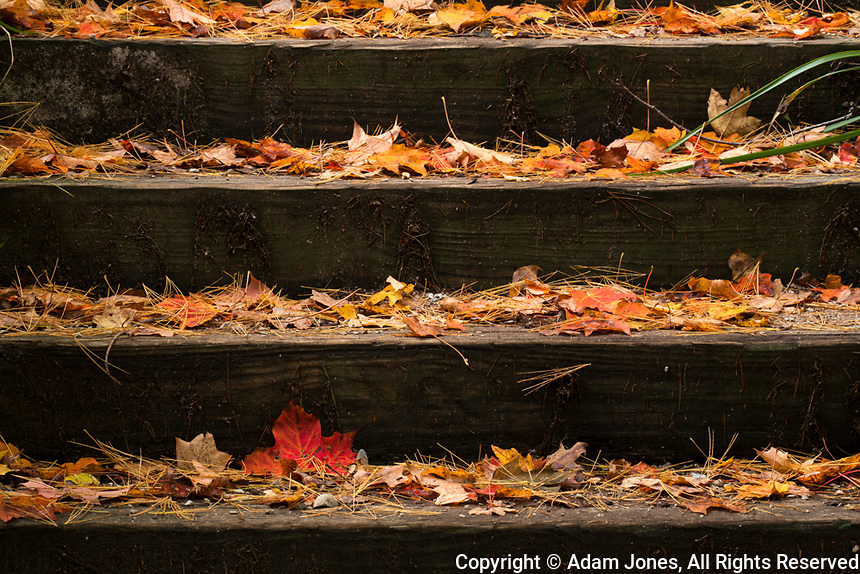Wood stairs covered in autumn leaves and pine needles, Munising Falls, Munising, Pictured Rocks National Lakeshore, Upper Peninsula, Michigan