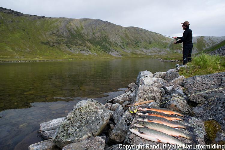 Fangst av sjørøye, tatt på flue. ---- Searun arctic char.