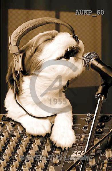 Samantha, ANIMALS, REALISTISCHE TIERE, ANIMALES REALISTICOS, funny, photos+++++Singing Dog master,AUKP60,#a#