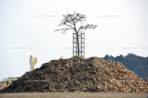 "March 9, 2013, Rikuzentakata, Japan - The replica of the ""miracle pine tree"" stands on the beach of Rikuzentakata, Iwate Prefecture, on March 9, 2013. The original pine survived the March 11, 2011, tsunami but later died from seawater damage. The preserved trunk was set on the site where branches and leaves were replicated using synthetic resin. The city of Rikuzentakata lost 1,773 people in the disaster and debris still remains in the area.  (Photo by Natsuki Sakai/AFLO)"