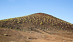 Green euphorbia balsamifera bushes spread over volcanic hillside near El Golfo, Lanzarote, Canary Islands, Spain