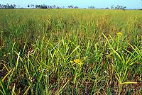 Sawgrass prairie, Everglades National Park, Florida