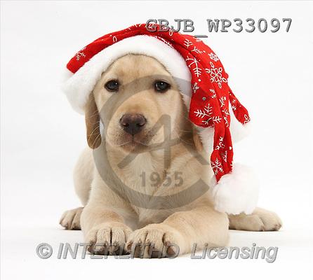 Kim, CHRISTMAS ANIMALS, photos(GBJBWP33097,#XA#) stickers