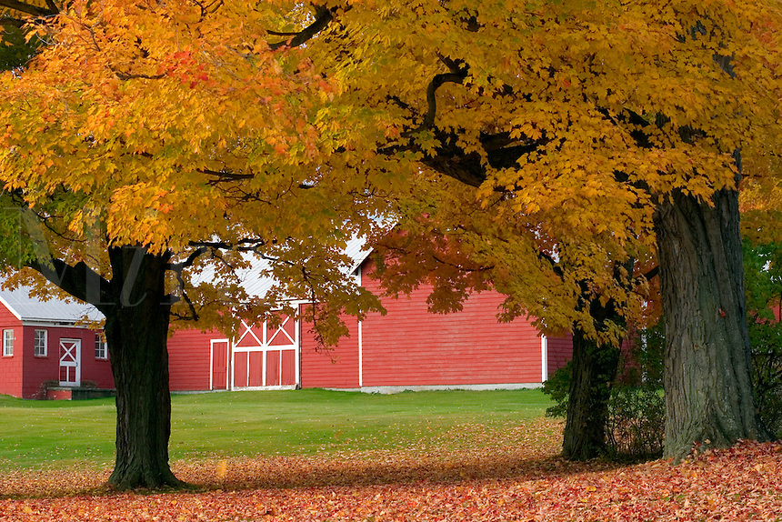 RED BARN IN NORTH HERO, VT IN THE LAKE CHAMPLAIN ISLANDS.