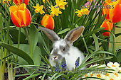 Kim, EASTER, OSTERN, PASCUA, photos+++++,GBJBWP41625,#e#