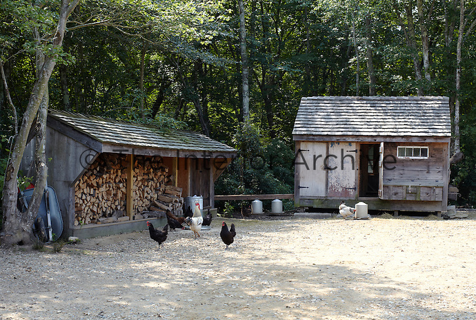 Free range hens and a cockerel have the run of the farmyard as well as a cosy shed to retreat to