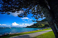 Bay Of Plenty Regional Council stock photography in Tauranga, New Zealand on Friday, 7 June 2019. Photo: Dave Lintott / lintottphoto.co.nz