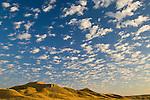 Badlands, buffalo, prairie dogs, mud forms