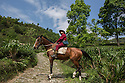India – West Bengal: Rajah Banerjee, the chairman of Makaibari Tea Estates, riding one of his horses within the tea garden. Makaibari is one of the most famous Darjeeling tea brands and was an official partner of the 2008 Beijing Olympic games.