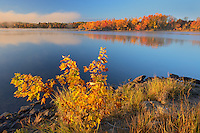 Vermilion River in autumn with fog<br /> Whitefish<br /> Ontario<br /> Canada