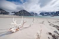 Arctic circle / Spitzberg