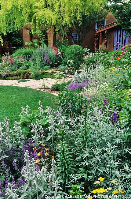 In the southwest and Rocky Mountain areas, water wise landscape designs come in all colors and shapes and incorporate a wide range of both nativespecies as well as appropriate adapted plants, ranging from succulents and cacti to endemic penstemons and traditional perennials.  Avid gardeners and atrists Joan and Joel Brink created a colorful and  water saving garden at their east side Santa Fe compund.