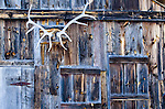 antlers on barn near the East Fork of Fish Creek, Estes Park, Rocky Mountains, Colorado, USA
