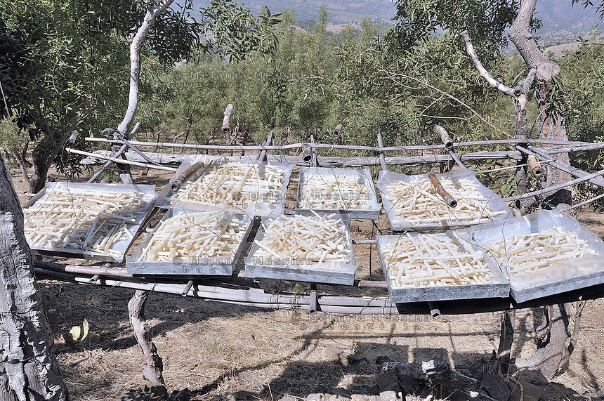 Castelbuono, manna harvest is left to dry.<br /> <br /> Castelbuono, la manna raccolta viene messa ad asciugare.