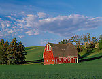 Whitman County, WA      <br /> Weathered red barn surrounded by the green hills of the Palouse under a summer sky in early morning