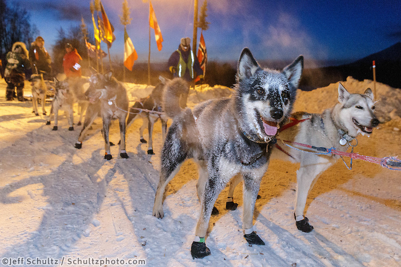 Paige Drobny dogs are ready to continue after an 18 mile run from McGrath at the Takotna checkpoint, Thursdday, March 6, during the Iditarod Sled Dog Race 2014.<br />