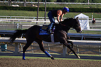 Title Contender galloping for trainer Bob Baffert at Santa Anita Park in Arcadia California