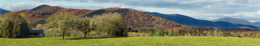 Cattle pasture and mountains in autumn in Albemarle County, Virginia.